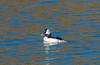 28 Tule Lake