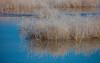 37 Tule Lake