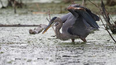 Big bird catches small fish