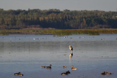 Early Fall on Big Lake
