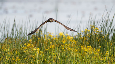 Low down in the reeds