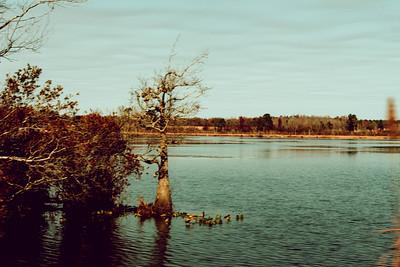 Swampland & cotton fields, South Carolina, USA