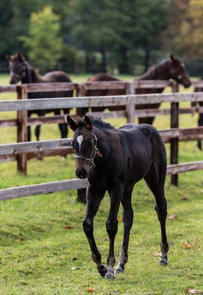 Frankel colt foal - The National Stud, Newmarket (October 2018)