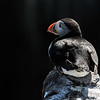 Puffin - Farne Islands - Northumberland (May 2018)