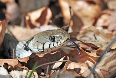 13. Europäische Reptilien & Amphibien -  Reptiles and Amphibians of Europe