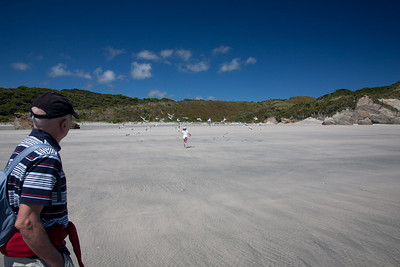 Golden Bay 2011