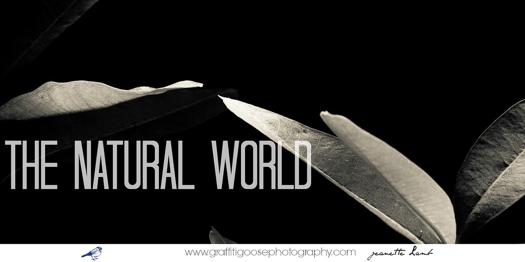 LA NATURAL WORLD