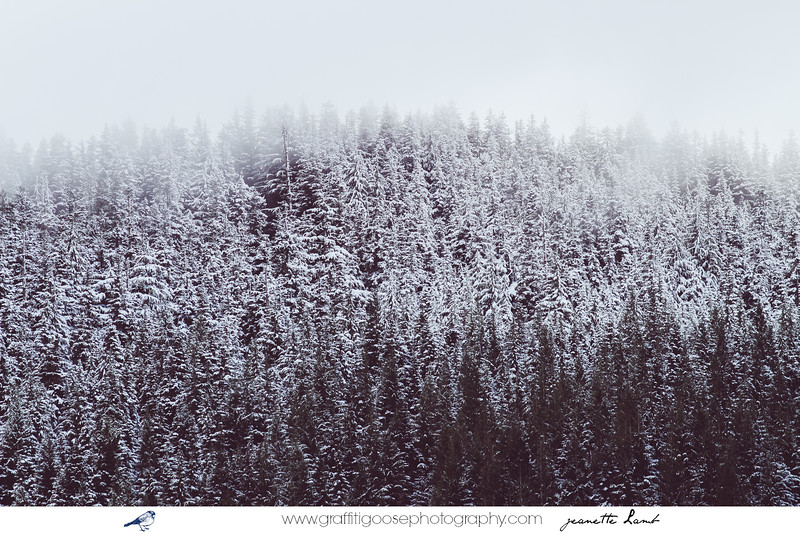 Mount Hood | Oregon | 2014 |jeanette Lamb | Graffiti Goose Photography