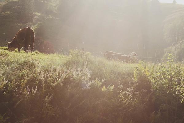 Schwartzwald// Black Forest