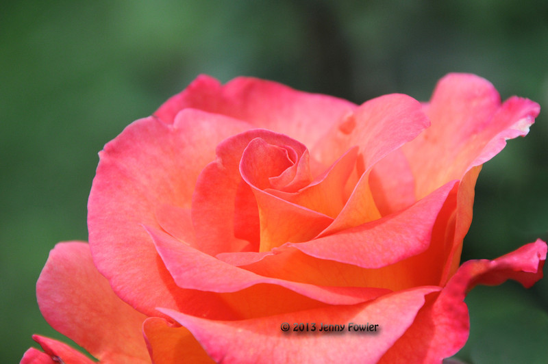 International Test Rose Garden
