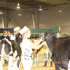 ABProvincial_4-H_2016_IMG_9087