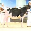 ABAB_Holstein_Calves_L32A4089