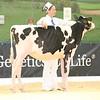 ABAB_Holstein_Calves_L32A4088