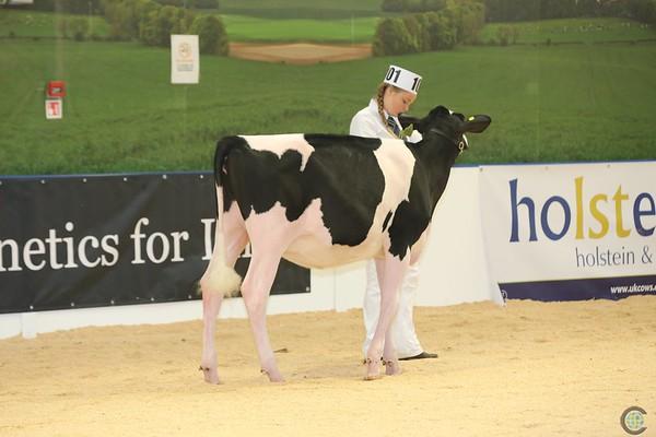 ABAB_Holstein_Calves_L32A4084