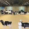 ABAB_Holstein_Calves_L32A4094