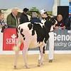 ABAB_Holstein_Calves_L32A4093