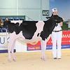 ABAB_Holstein_Calves_L32A4091