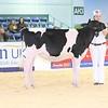 ABAB_Holstein_Calves_L32A4092
