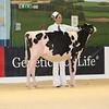 ABAB_Holstein_Calves_L32A4087