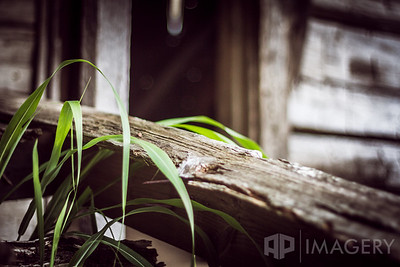 Decaying Wooden Shed