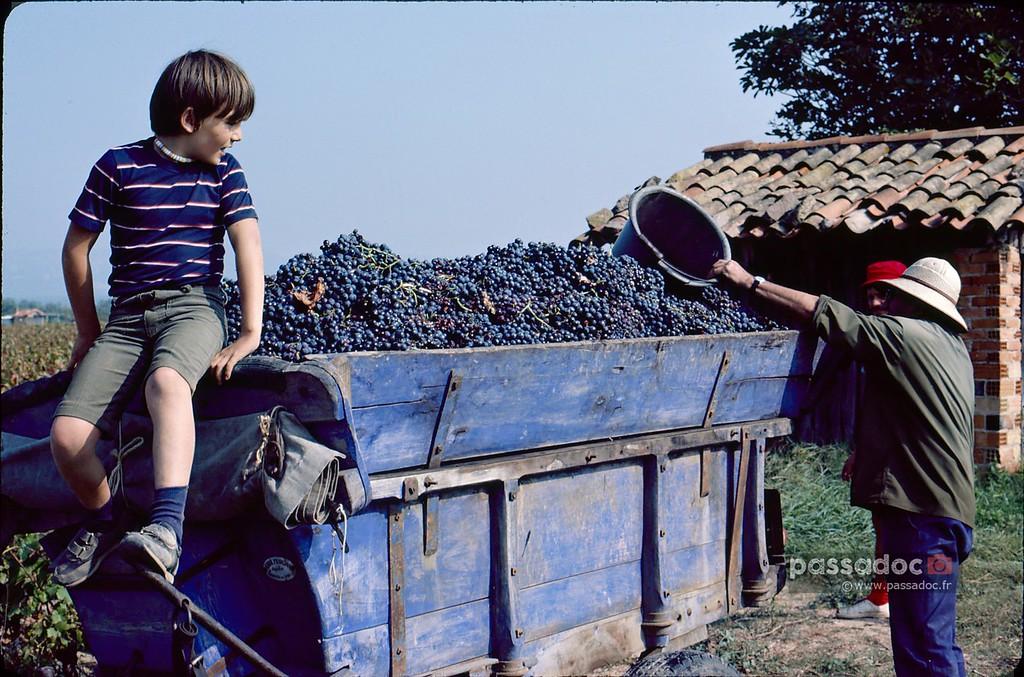 Vendanges à Roquebrune en 1983
