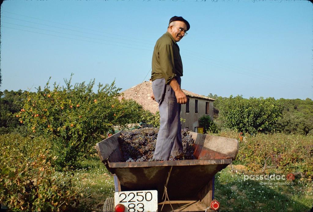 Vers 1976 Vendanges à Roquebrune Var années 80