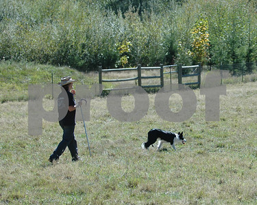 ABHCWW AKC Herding Trial 2006 Sep 23-24 Battleground WA