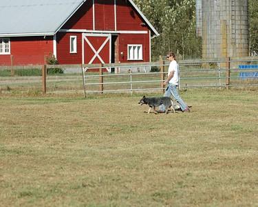 ABHCWW AKC Herding Trial 2005 Aug 26-28 (Arlington, WA)