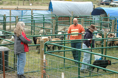 ABHCWW AKC Herding Trial 2006 May 27-29 (PackLeader Farm - Gig Harbor, WA)