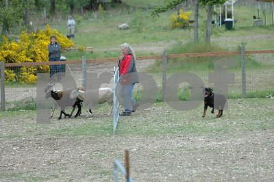 Monday   Pre-Trial Test Sheep