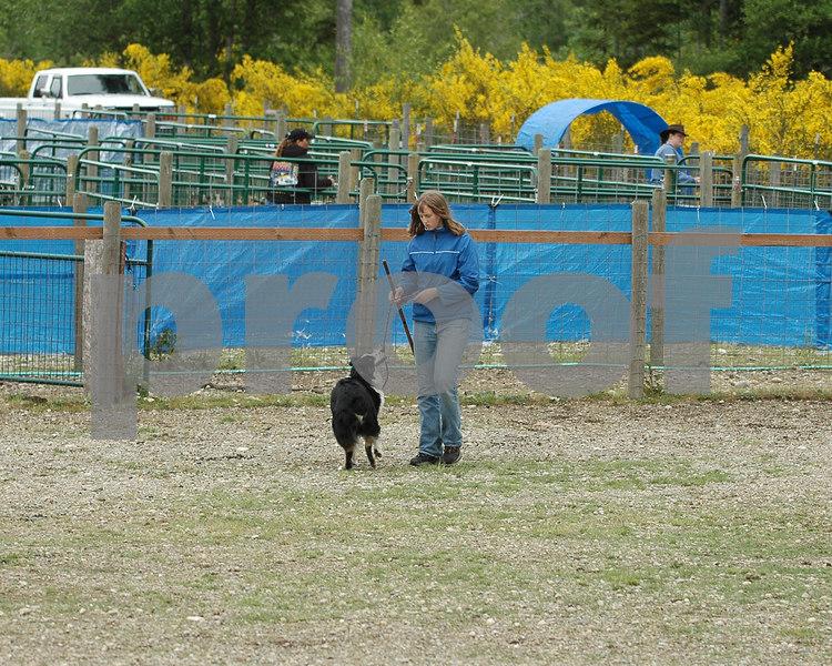 ABHCWW AKC Herding Trial May 2006 - PackLeader Farm - Gig Harbor, Washington
