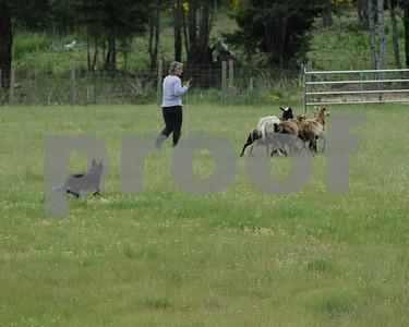 Sunday : Intermediate Sheep