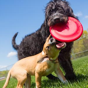 dogs + catherine