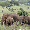 Elephant Family in the Flowers