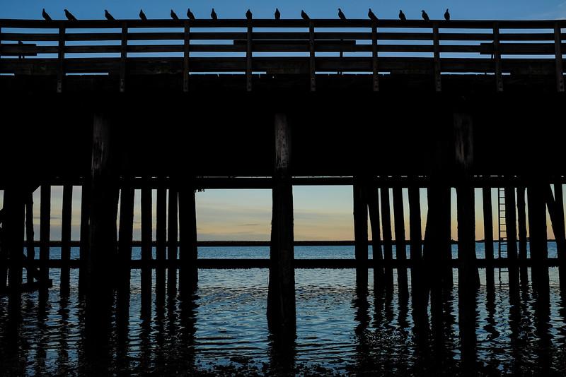 Pigeon Rail