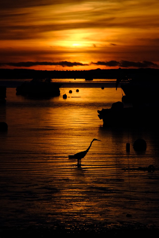 Crane Fishing