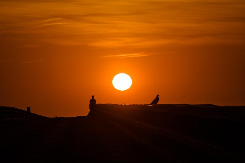 Sun, Man, Animal