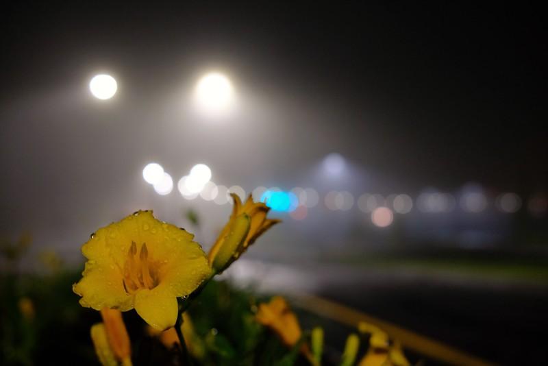 Foggy Garden