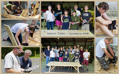 20140601 Habitat Tables ABVM Collage