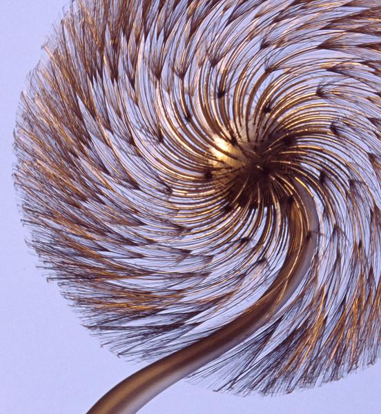 Spiral Dandelion
