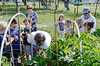 Kids from the First Learning Tree after school program of the First Methodist Church in Rockport get to pick some of the vegetables from the community garden.