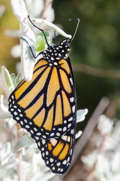 Monarch-ACR-2014DT