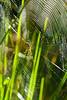 Silver Banded Garden Spider3845-ACR-2014DT