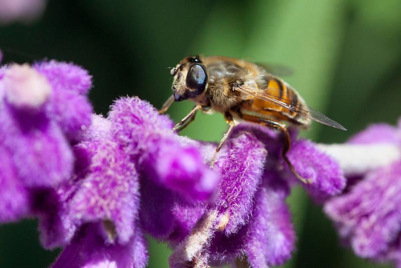 Bee2598