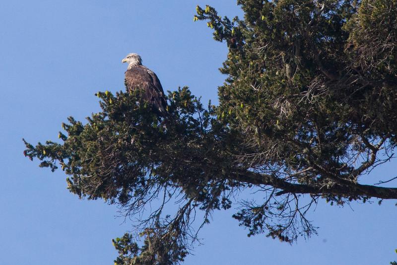 Eagle2808