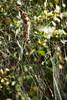 LabyrinthSpider3842-ACR-2014DT