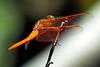 Dragonfly8704(8x12)