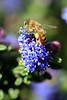 HoneyBee0619