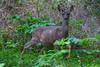 Deer2366=ACR-2015DT
