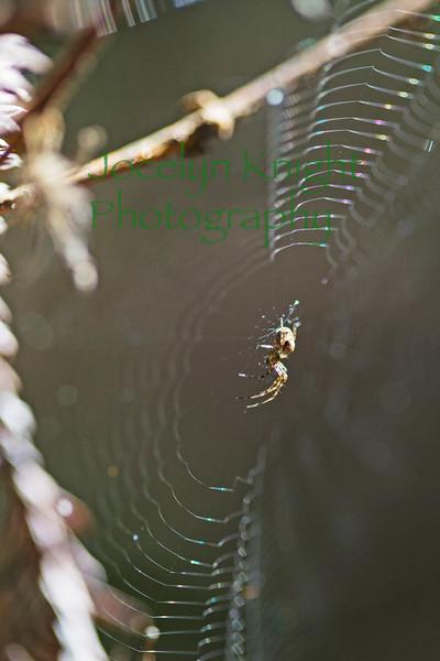 Spider6698